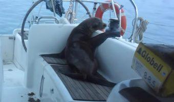 Sailing Adventure in the Galapagos Islands (Sailing La Vagabonde) Ep. 40